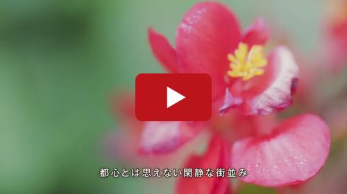 お墓や寺院のテレビCM動画制作を行い東京で配信しました。